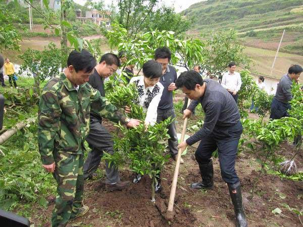 梁平县灾后恢复农业生产,森林工程补植及时启动图片