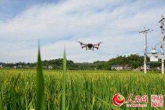 梁平:无人机统防统治 助农增收