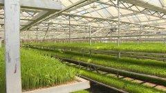 工厂化设施育秧1200公斤 带动水稻农机化发展