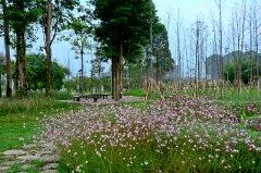 梁平:双桂湖国家湿地公园梁山草甸二期修复开放