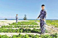 重庆交大在西沙海滩试种蔬菜成功 半亩地采收7种蔬菜共1500多斤